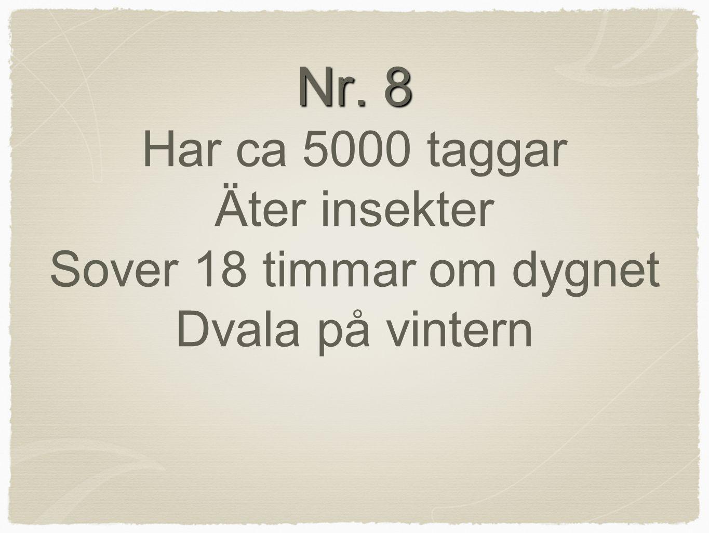 Nr. 8 Nr. 8 Har ca 5000 taggar Äter insekter Sover 18 timmar om dygnet Dvala på vintern