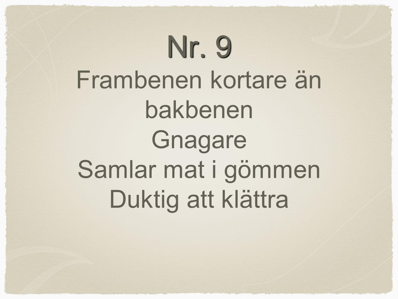 Nr. 9 Nr. 9 Frambenen kortare än bakbenen Gnagare Samlar mat i gömmen Duktig att klättra