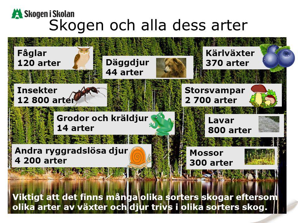 Skogen och alla dess arter Viktigt att det finns många olika sorters skogar eftersom olika arter av växter och djur trivs i olika sorters skog. Grodor