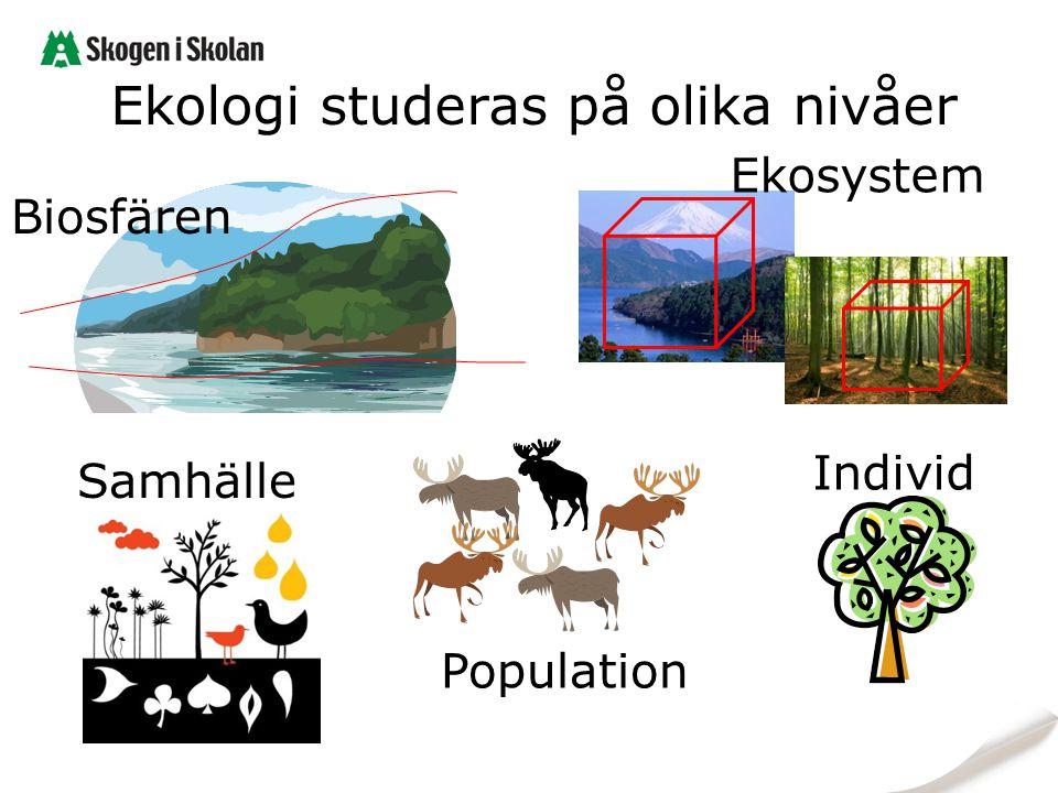Ekologi studeras på olika nivåer Biosfären Ekosystem Samhälle Individ Population