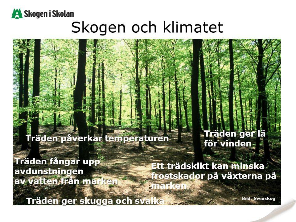 Skogen och klimatet Träden påverkar temperaturen Träden ger skugga och svalka Träden ger lä för vinden Ett trädskikt kan minska frostskador på växtern