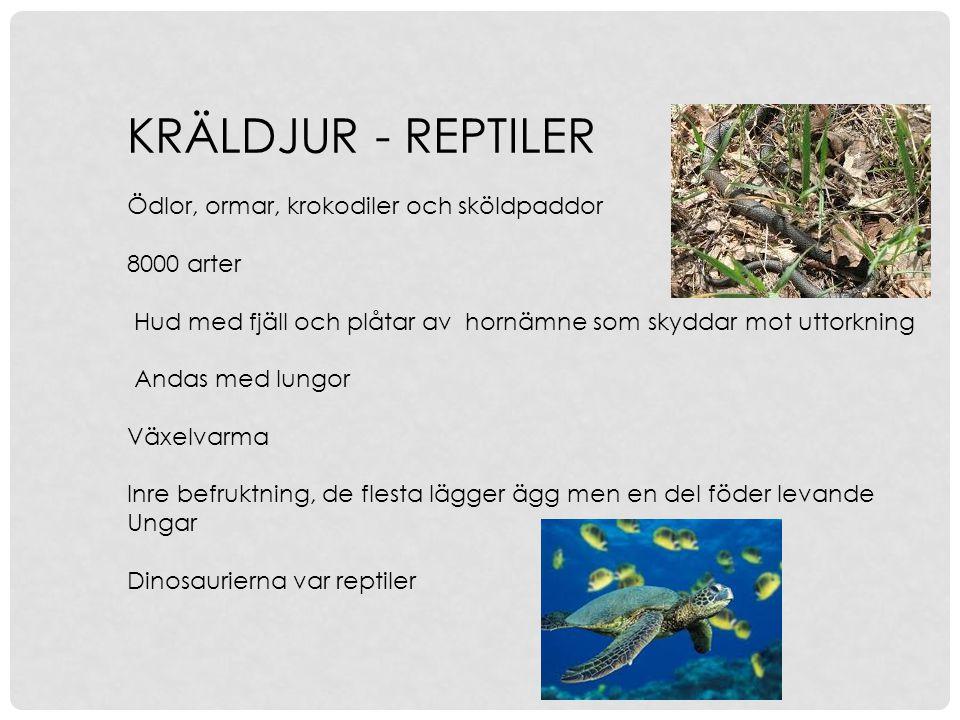 KRÄLDJUR - REPTILER Ödlor, ormar, krokodiler och sköldpaddor 8000 arter Hud med fjäll och plåtar av hornämne som skyddar mot uttorkning Andas med lung