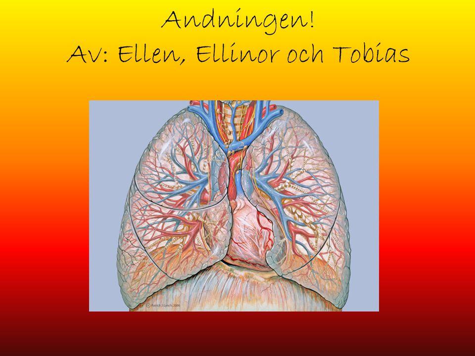 Andningen! Av: Ellen, Ellinor och Tobias