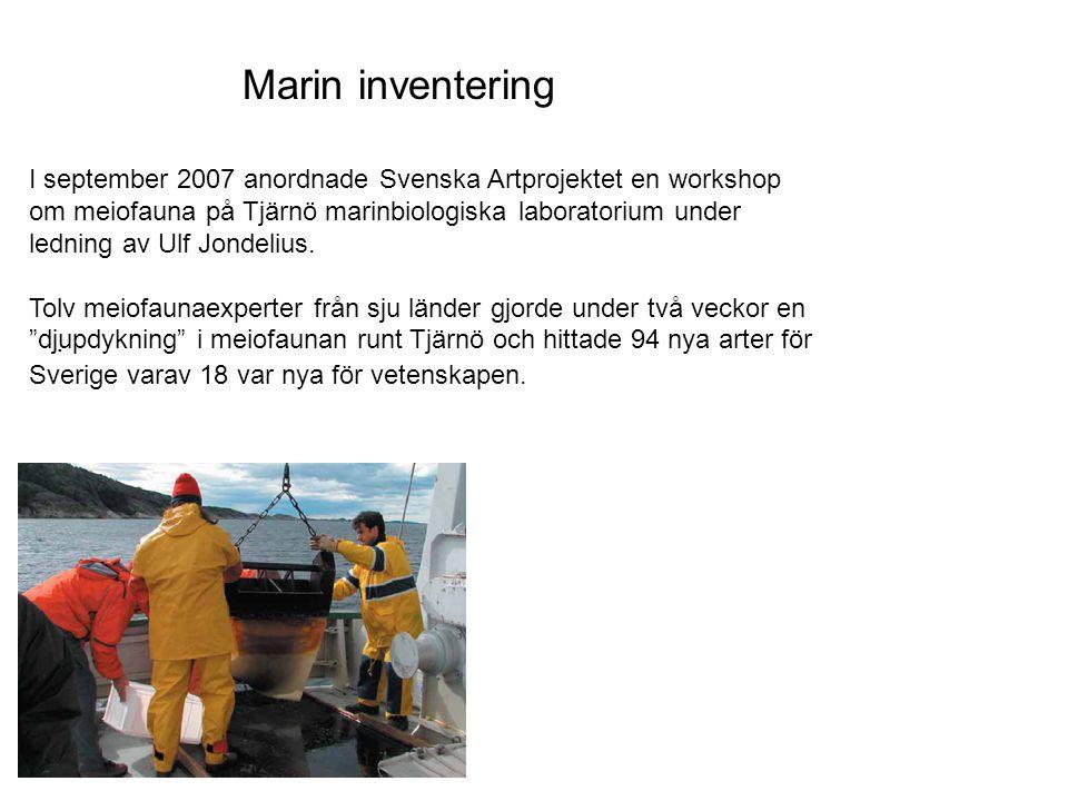 Marin inventering I september 2007 anordnade Svenska Artprojektet en workshop om meiofauna på Tjärnö marinbiologiska laboratorium under ledning av Ulf Jondelius.