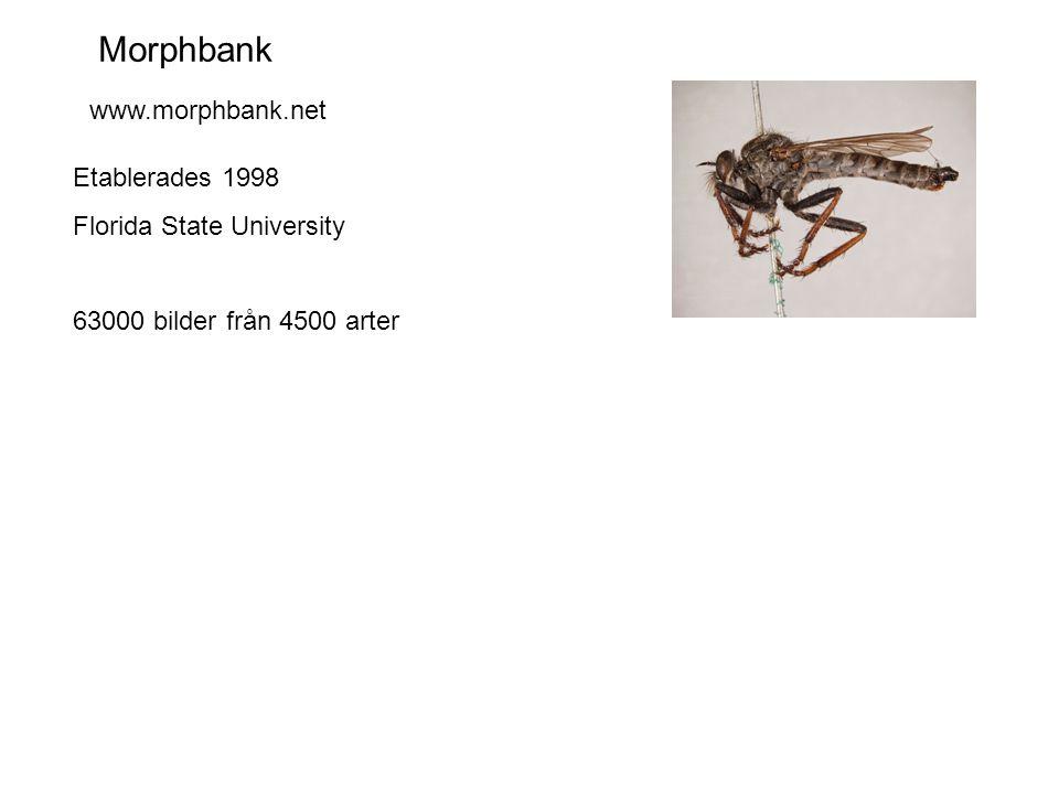 Morphbank Etablerades 1998 Florida State University 63000 bilder från 4500 arter www.morphbank.net