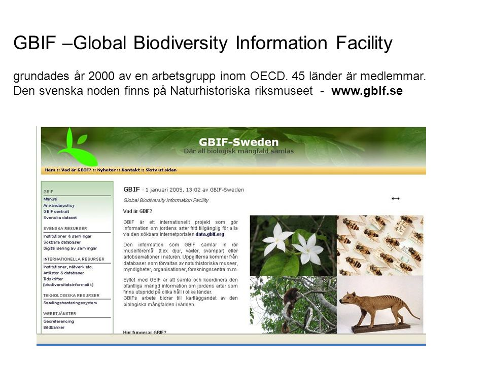 GBIF –Global Biodiversity Information Facility grundades år 2000 av en arbetsgrupp inom OECD.
