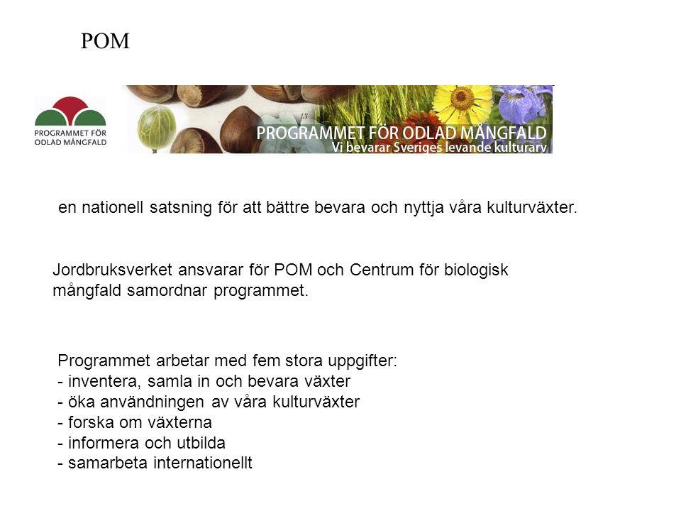 POM en nationell satsning för att bättre bevara och nyttja våra kulturväxter.