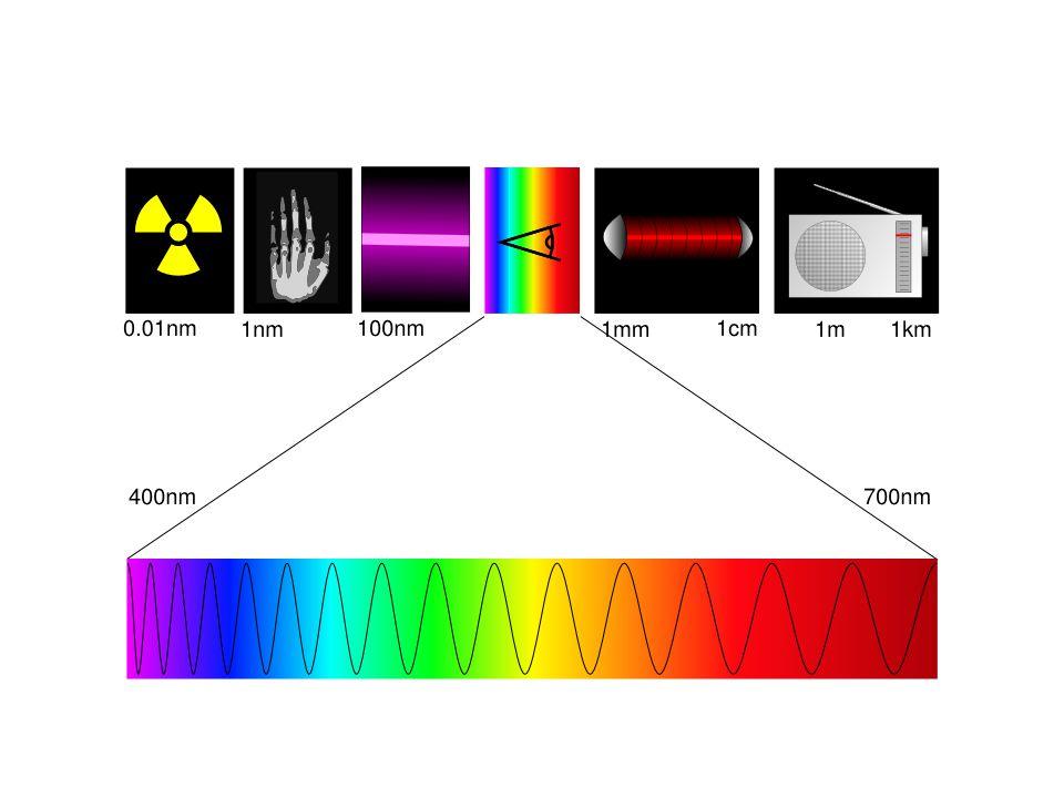 Syn Uppfunnet minst 8 separata gånger i evolutionen! Finns hos både djur och växter