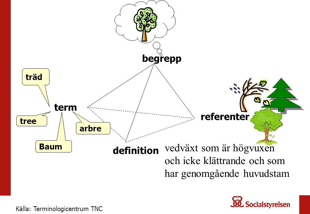 begrepp definition vedväxt som är högvuxen och icke klättrande och som har genomgående huvudstam referenter träd term tree Baum arbre Källa: Terminologicentrum TNC