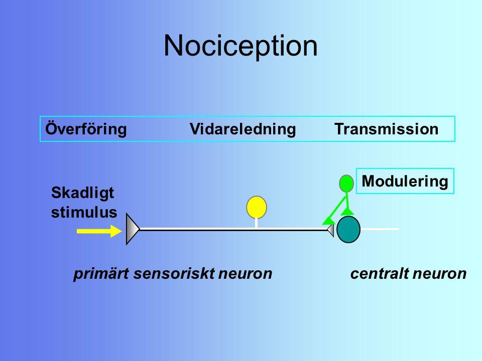 Nociception Skadligt stimulus ÖverföringVidareledning Transmission primärt sensoriskt neuron centralt neuron Modulering