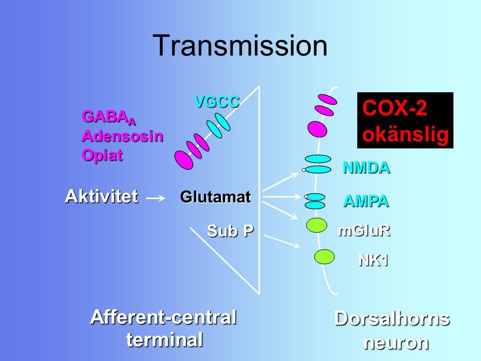 Transmission Afferent-central terminal Glutamat Sub P Aktivitet NK1 mGluR NMDA AMPA VGCC GABA A AdensosinOpiat Dorsalhornsneuron COX-2 okänslig
