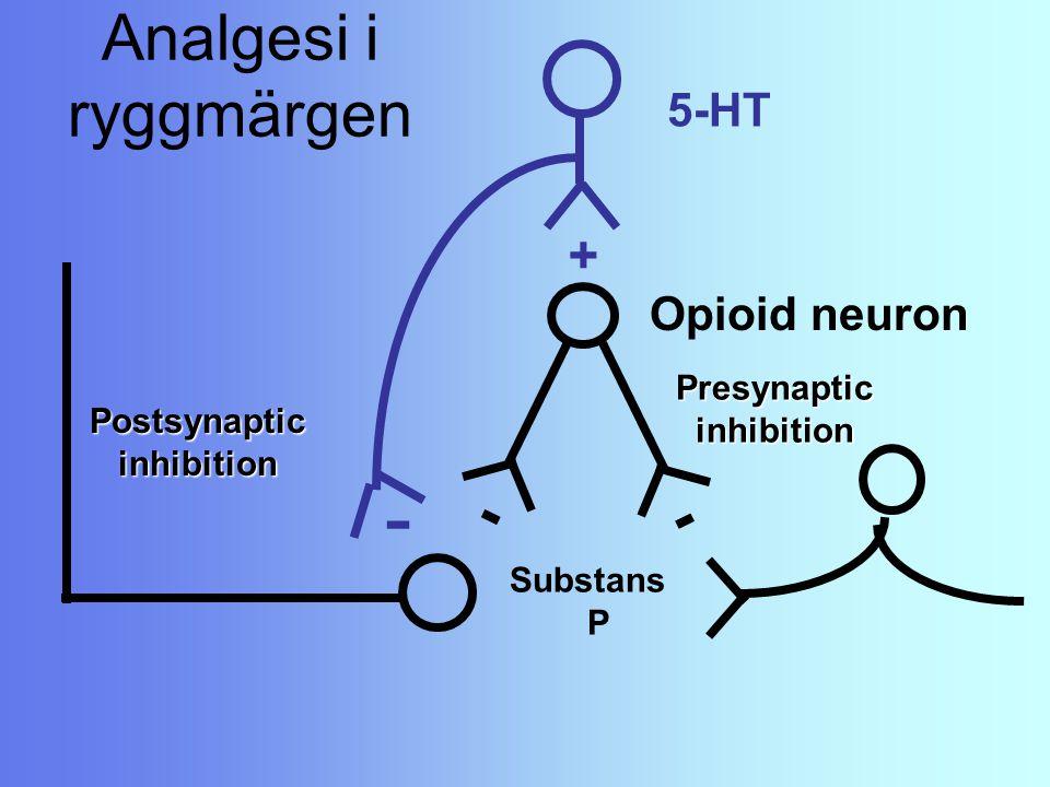 Analgesi i ryggmärgen Substans P Postsynaptic inhibition inhibition Presynaptic - Opioid neuron - - 5-HT +