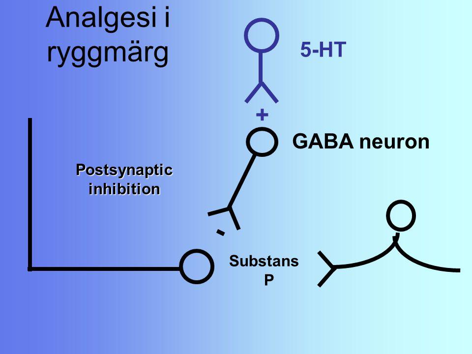 Analgesi i ryggmärg Substans P Postsynaptic inhibition GABA neuron - 5-HT +