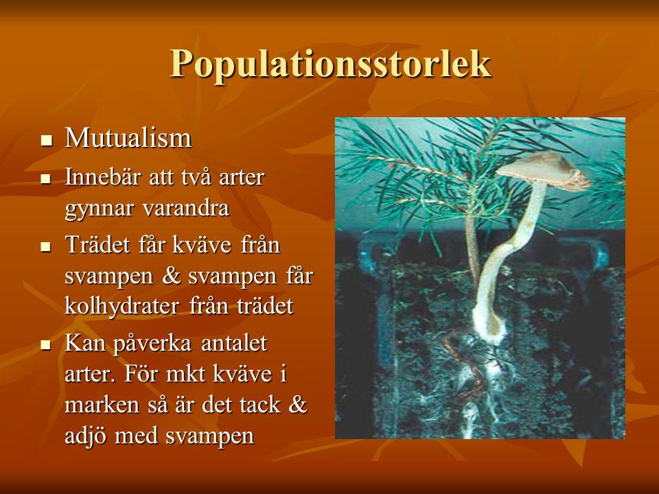 Populationsstorlek Mutualism Mutualism Innebär att två arter gynnar varandra Innebär att två arter gynnar varandra Trädet får kväve från svampen & sva