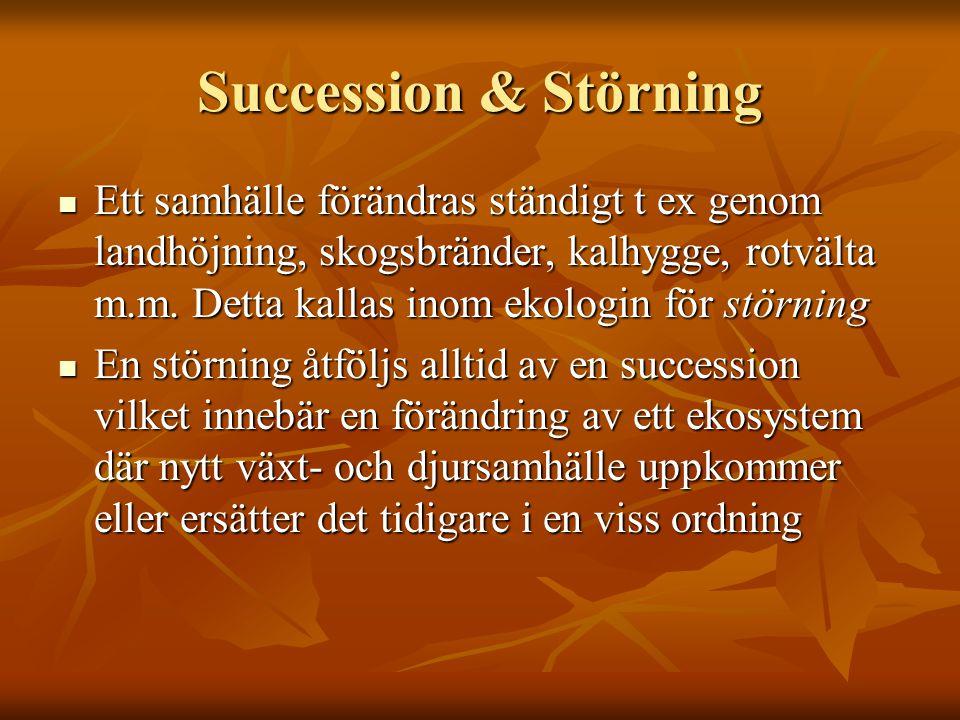 Succession & Störning Ett samhälle förändras ständigt t ex genom landhöjning, skogsbränder, kalhygge, rotvälta m.m. Detta kallas inom ekologin för stö