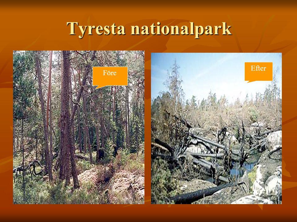 Tyresta nationalpark Före Efter