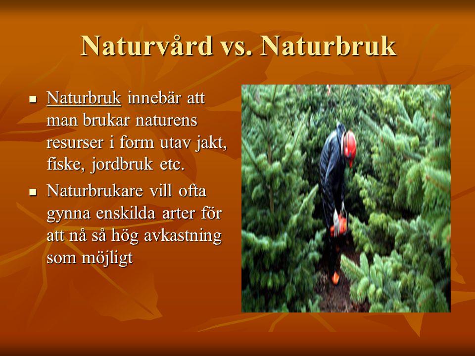 Naturvård vs. Naturbruk Naturbruk innebär att man brukar naturens resurser i form utav jakt, fiske, jordbruk etc. Naturbruk innebär att man brukar nat