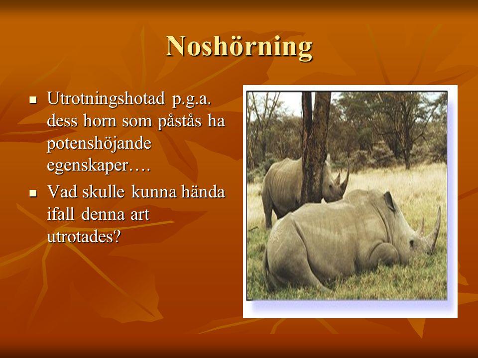 Noshörning Utrotningshotad p.g.a. dess horn som påstås ha potenshöjande egenskaper…. Utrotningshotad p.g.a. dess horn som påstås ha potenshöjande egen