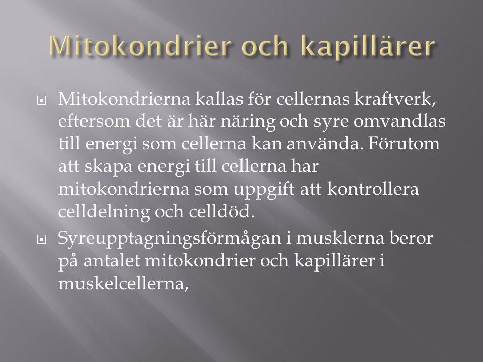  Mitokondrierna kallas för cellernas kraftverk, eftersom det är här näring och syre omvandlas till energi som cellerna kan använda.