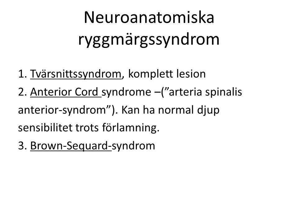 Neuroanatomiska ryggmärgssyndrom 1.Tvärsnittssyndrom, komplett lesion 2.