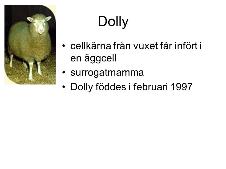 Dolly cellkärna från vuxet får infört i en äggcell surrogatmamma Dolly föddes i februari 1997