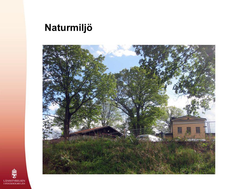 Naturmiljö