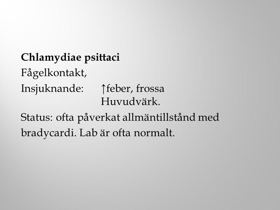 Chlamydiae psittaci Fågelkontakt, Insjuknande: ↑feber, frossa Huvudvärk. Status: ofta påverkat allmäntillstånd med bradycardi. Lab är ofta normalt.