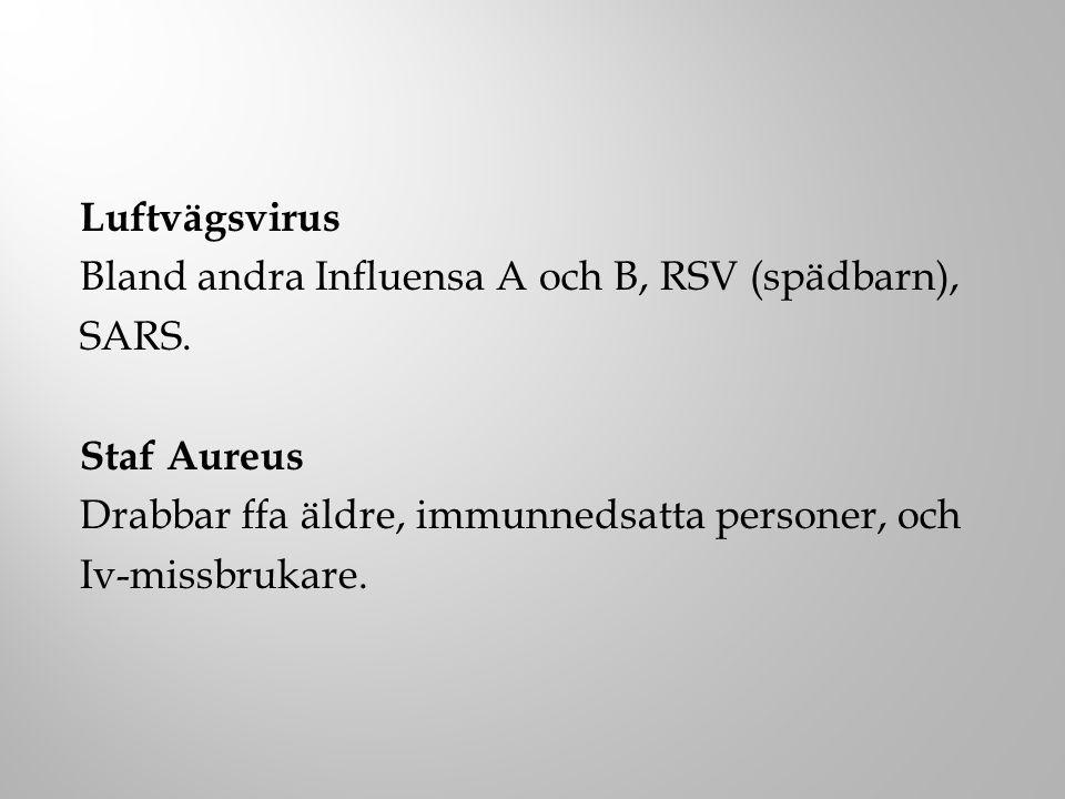 Luftvägsvirus Bland andra Influensa A och B, RSV (spädbarn), SARS. Staf Aureus Drabbar ffa äldre, immunnedsatta personer, och Iv-missbrukare.