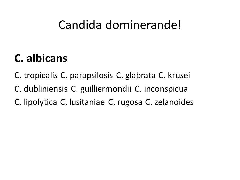 Candida dominerande.C. albicans C. tropicalis C. parapsilosis C.