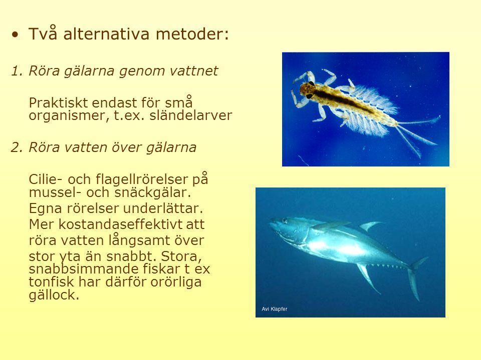 Två alternativa metoder: 1.Röra gälarna genom vattnet Praktiskt endast för små organismer, t.ex.