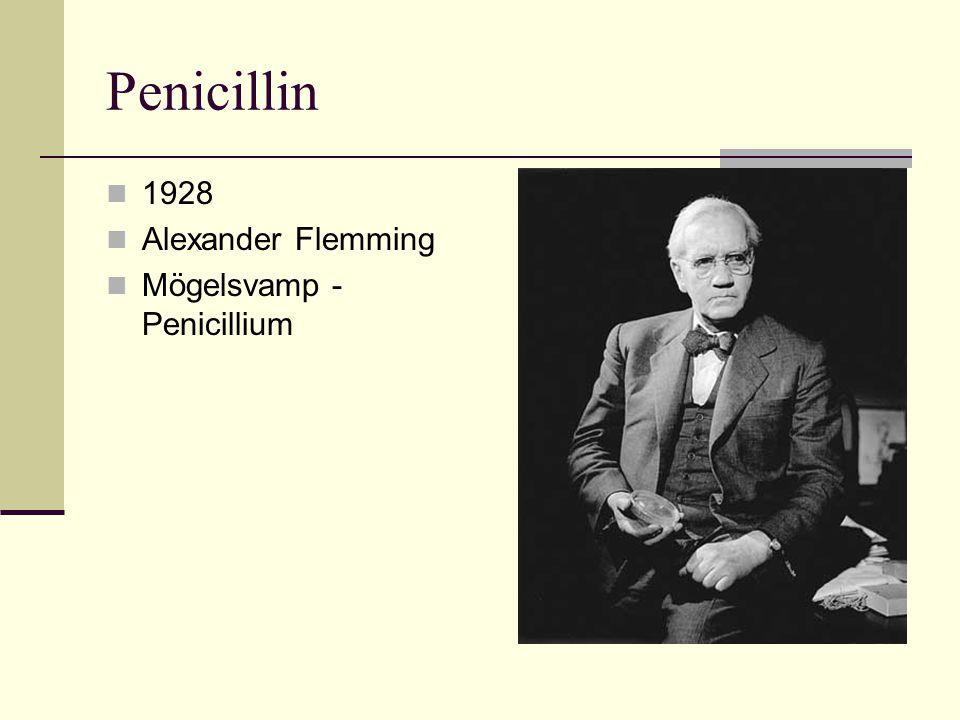 Penicillin 1928 Alexander Flemming Mögelsvamp - Penicillium