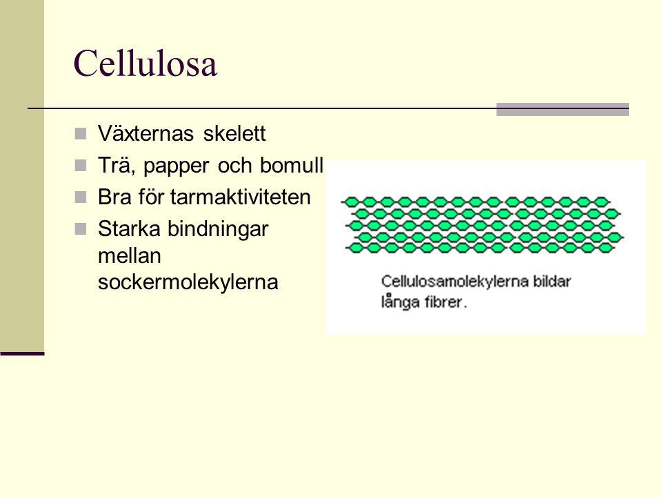 Cellulosa Växternas skelett Trä, papper och bomull Bra för tarmaktiviteten Starka bindningar mellan sockermolekylerna