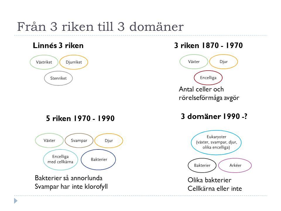 Från 3 riken till 3 domäner Linnés 3 riken3 riken 1870 - 1970 5 riken 1970 - 1990 3 domäner 1990 -.
