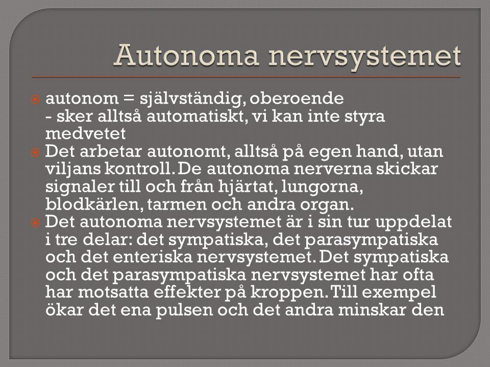  autonom = självständig, oberoende - sker alltså automatiskt, vi kan inte styra medvetet  Det arbetar autonomt, alltså på egen hand, utan viljans ko