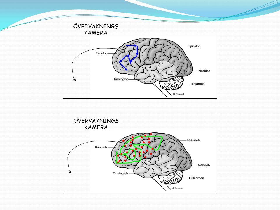 Exekutiva funktioner Sortering, strukturering, impulskontroll, mental flexibilitet och övervakning.