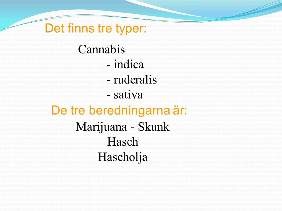 Det finns tre typer: Cannabis - indica - ruderalis - sativa De tre beredningarna är: Marijuana - Skunk Hasch Hascholja