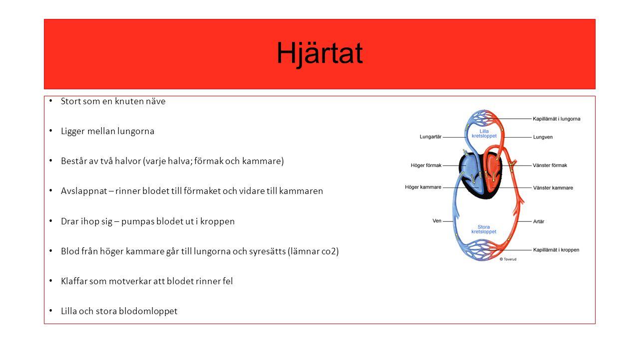Hjärtat Stort som en knuten näve Ligger mellan lungorna Består av två halvor (varje halva; förmak och kammare) Avslappnat – rinner blodet till förmake
