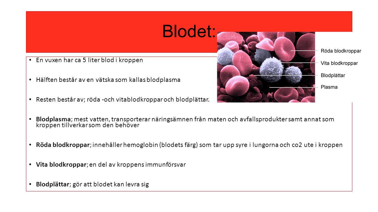 Blodet: En vuxen har ca 5 liter blod i kroppen Hälften består av en vätska som kallas blodplasma Resten består av; röda -och vitablodkroppar och blodp