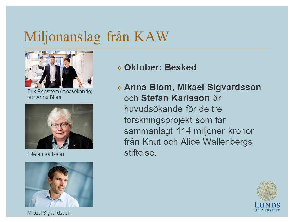 Miljonanslag från KAW »Oktober: Besked »Anna Blom, Mikael Sigvardsson och Stefan Karlsson är huvudsökande för de tre forskningsprojekt som får sammanlagt 114 miljoner kronor från Knut och Alice Wallenbergs stiftelse.