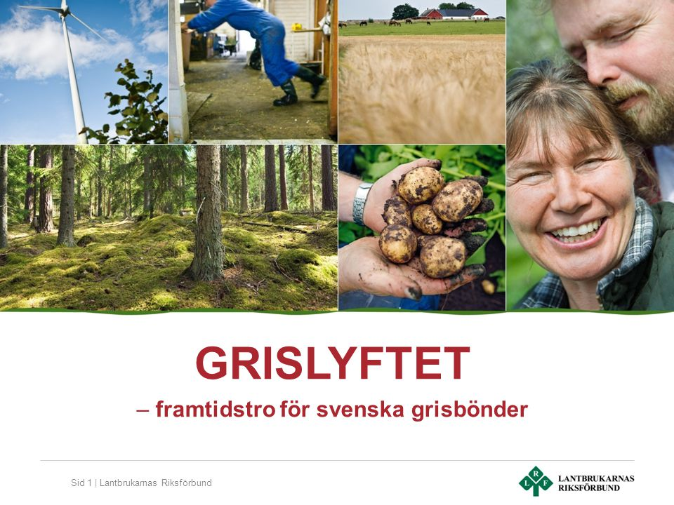 Sid 1 | Lantbrukarnas Riksförbund GRISLYFTET – framtidstro för svenska grisbönder