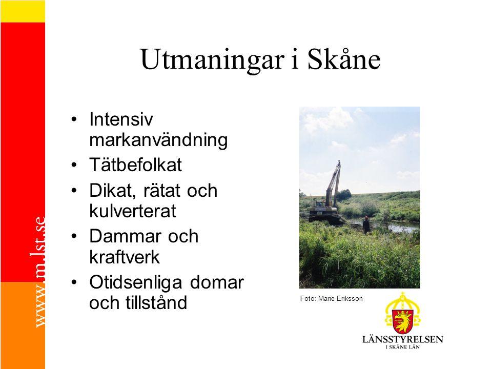 Utmaningar i Skåne Intensiv markanvändning Tätbefolkat Dikat, rätat och kulverterat Dammar och kraftverk Otidsenliga domar och tillstånd Foto: Marie E