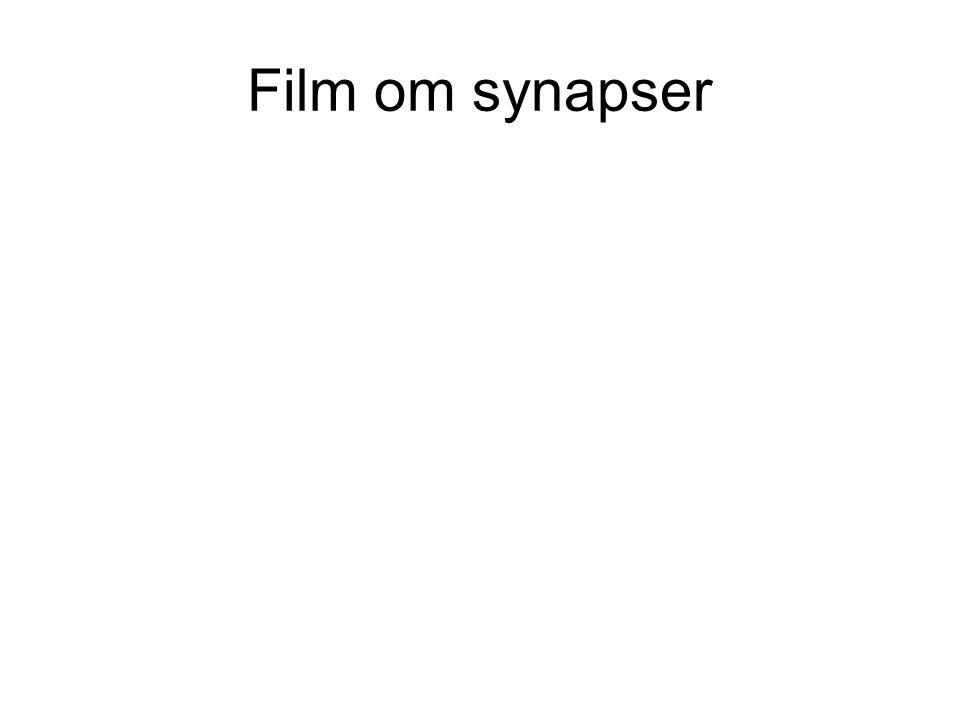 Film om synapser