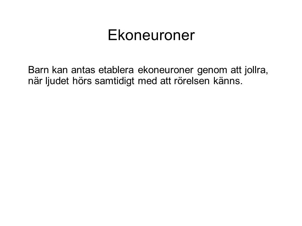 Ekoneuroner Barn kan antas etablera ekoneuroner genom att jollra, när ljudet hörs samtidigt med att rörelsen känns.
