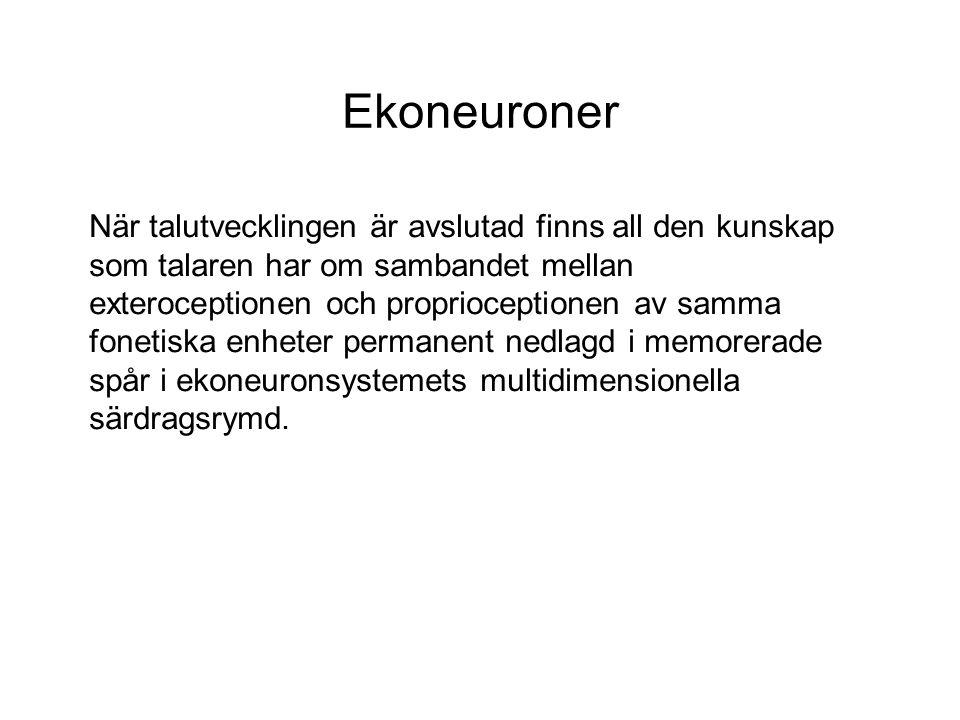 Ekoneuroner När talutvecklingen är avslutad finns all den kunskap som talaren har om sambandet mellan exteroceptionen och proprioceptionen av samma fonetiska enheter permanent nedlagd i memorerade spår i ekoneuronsystemets multidimensionella särdragsrymd.