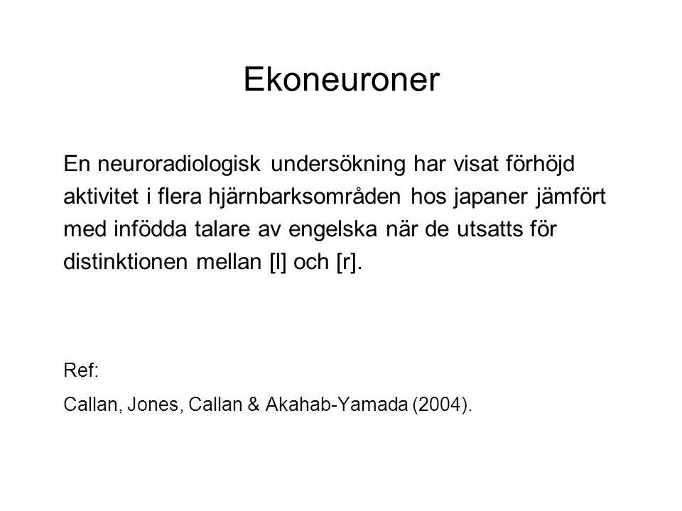 Ekoneuroner En neuroradiologisk undersökning har visat förhöjd aktivitet i flera hjärnbarksområden hos japaner jämfört med infödda talare av engelska när de utsatts för distinktionen mellan [l] och [r].