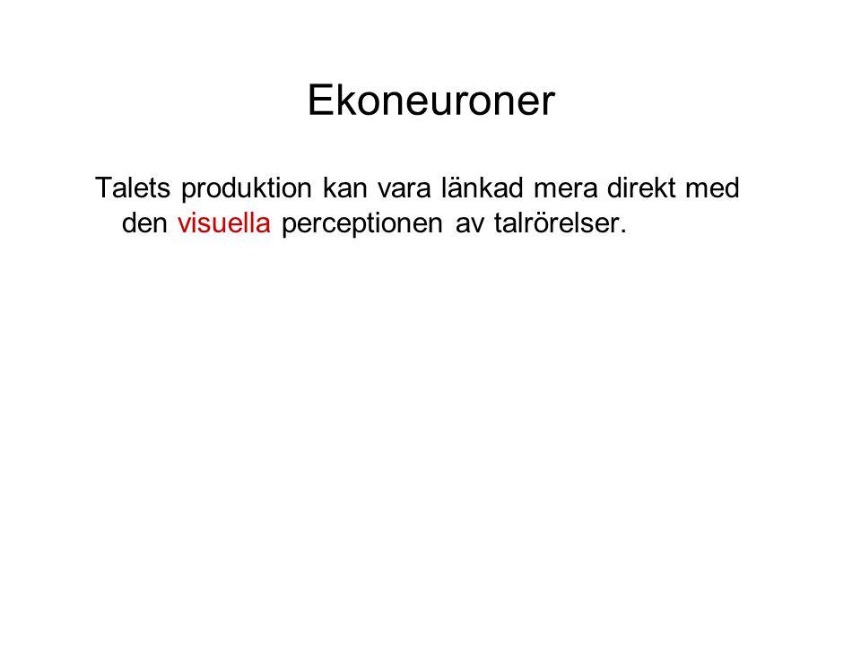 Ekoneuroner Talets produktion kan vara länkad mera direkt med den visuella perceptionen av talrörelser.