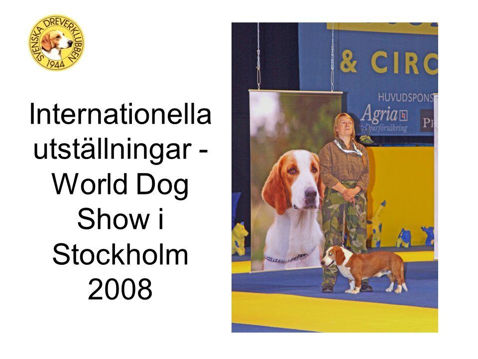 Kännetecken - Drevern Drevern ska vara en relativt långsträckt och lågställd hund, som präglas av styrka och robusthet.
