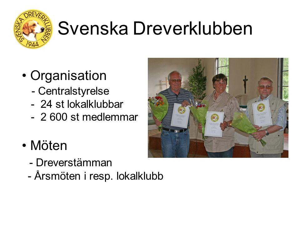 Historik - SDK Ursprunget en kortbent stövare från Westfalen i Sydtyskland på 1870-talet Första registreringen i SKK gjordes 1913 Dachsbrackenklubben bildades 1944 Drevern fick sitt namn 1947 efter omröstning i Svensk Jakt och Stockholmstidningen