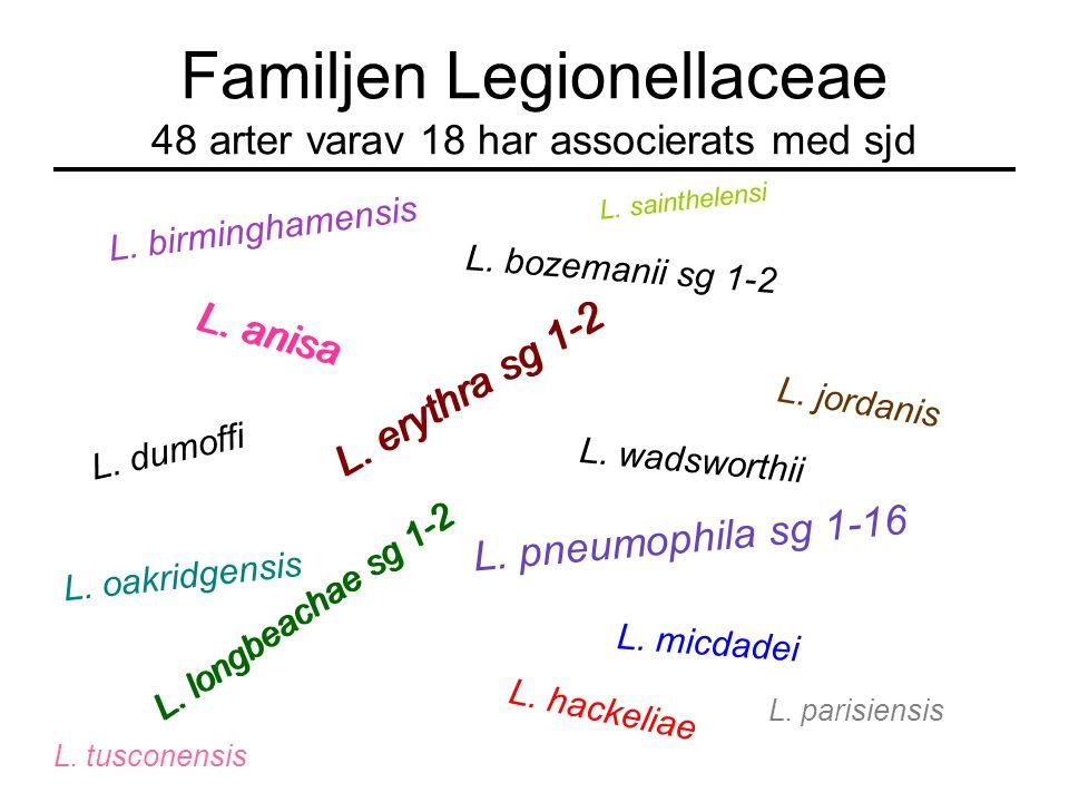 Legionella kan ge två infektioner LegionärssjukaPontiac feber SymtomLunginflammation Hög feber Andningssvårigheter Bröstsmärtor Torrhosta Förvirring I