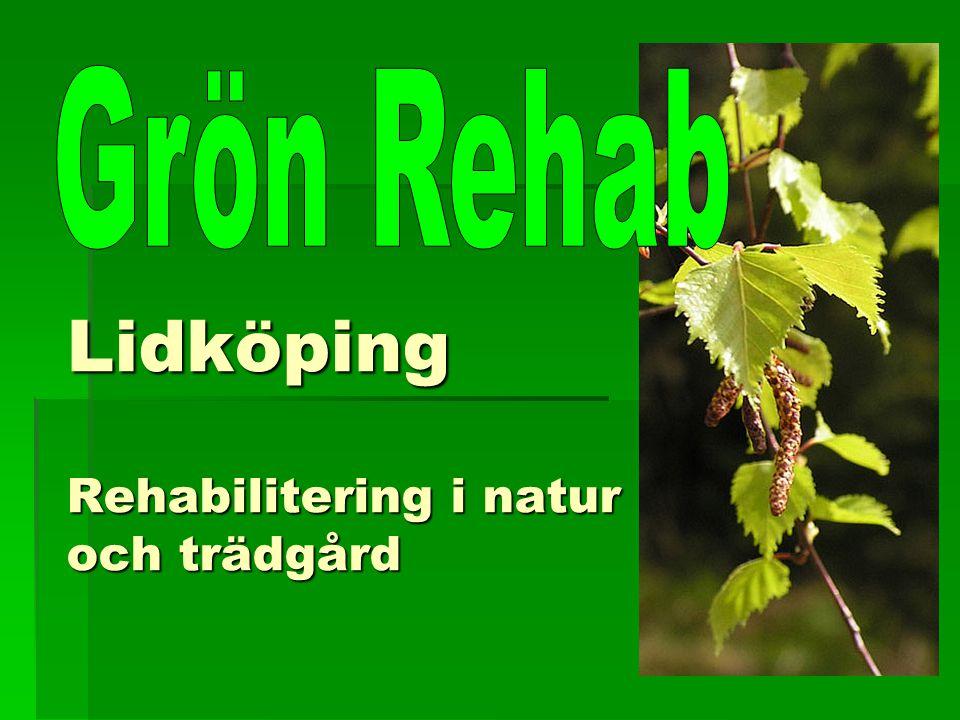 6 månader efter Grön Rehab Arbete En person arbetar heltid 3 arbetstränar (2, 3, 15 timmar/vecka) Sjukskrivning Stadigvarande sjukersättning 1 Tidsbegränsad sjukersättning 2 50% sjukers + 50% sjukskr.2 Aktivitetsersättning 100%1 Ingen sjukskrivning 1 Utförsäkrade, Arbetslivsintroduktion2